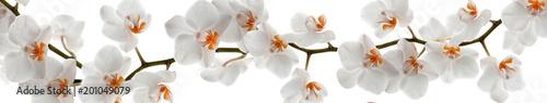 Orchidea oddział z kwiatami