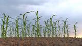 growing plants on a field