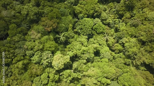 Aerial top down view of rainforest deforestation to make way for palm oil plantations and construction