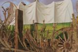 Wild West Wagon,cactus tree background theme