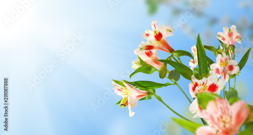 obraz zbliżenie piękne kwiaty