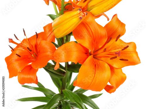 Lily - pomarańczowy