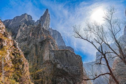 Foto op Aluminium Cappuccino Spring Forest Mountain Top