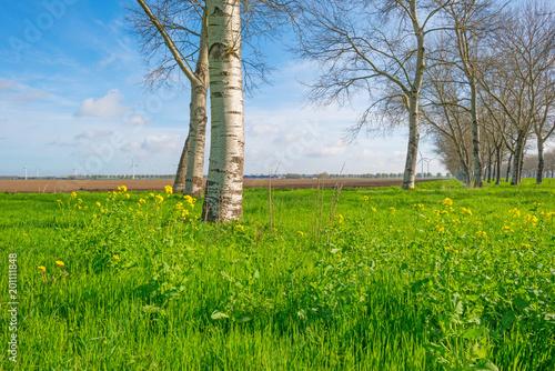Drzewa wzdłuż pola w świetle słonecznym w wiośnie