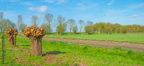 Foto Murales Knotted willow and flowers in a field in spring