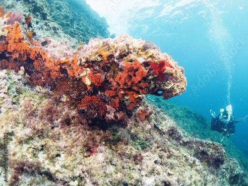Scuba Diving Malta - Wied iz-Zurrieq, l/o Qrendi and Um elFaroud Wreck