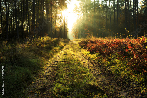Autumn scene with road in morning forest sunrise /  Beautiful misty sun rays in countryside of north Poland