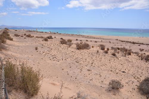 Dry Desert Landscape - 201139476