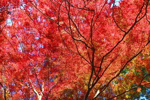 秋のハイキングコースの風景60 - 201141294