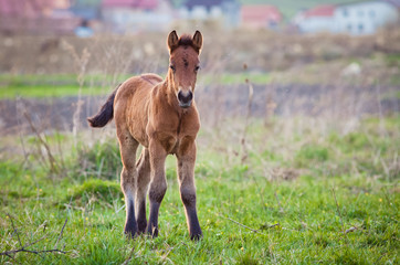 newborn foal on meadow at sunset