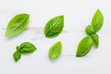 Fresh sweet green basil leaves on  white shabby wooden background. Sweet basil leaves with flat lay . - 201146207