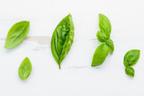 Fresh sweet green basil leaves on  white shabby wooden background. Sweet basil leaves with flat lay . - 201146213