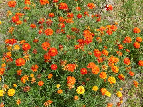 Flowers in the garden for background and wallpaper - 201147687