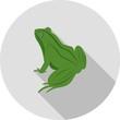 Frog, animal, green