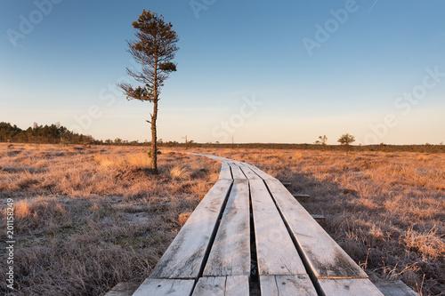 Drewniana kładka na torfowiskach Dunika na Łotwie.