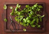 fresh basil herb on brown background - 201195260