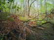 Spring Forest - 201197267