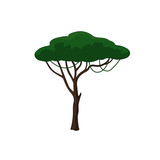Acacia tree in cartoon style on white background. African nature. Vector illustration - 201203094