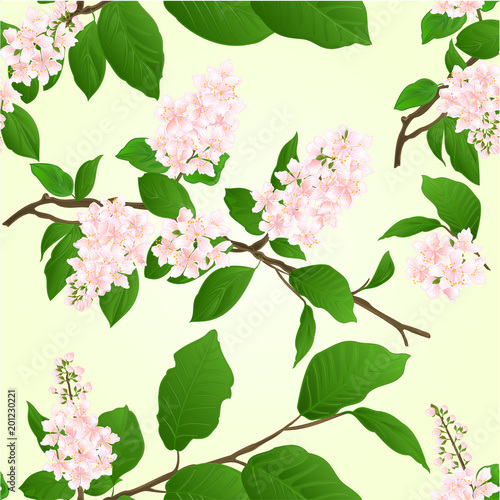 Seamless texture pink Lilac branch natural background vintage vector illustration editable hand draw