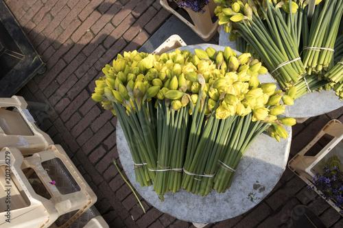 Daffodils na rynku kwiatów w Amsterdamie na sprzedaż