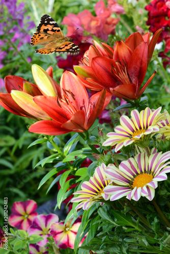 Fotobehang Koraal Blumen 937