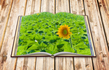 Open sunflower isolated in a field - image with copy space - 3D render concept image of an opened photo book isolated on white - I'm the copyright owner of the images used in this 3D render