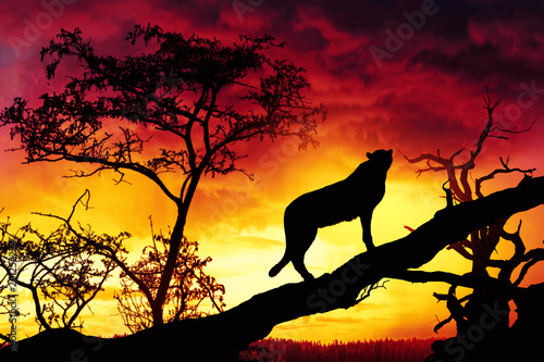 Fotobehang Panter silhouette of cheetah on tree at suset