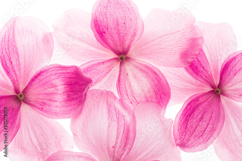 Floral background pink flowers macro photo