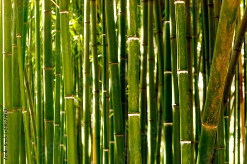 Plexiglas Bamboe Bamboo