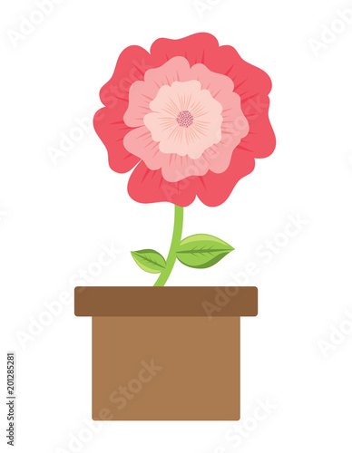Wall mural flower plant in a pot over white background, colorful design. vector illustration