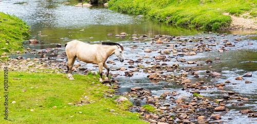 Plexiglas Rio de Janeiro Cavalo e rio