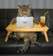 The cat with a laptop is sitting on the black leather sofa and drinking a cold tea