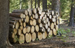 Stacked firewood at a Saskatchewan park