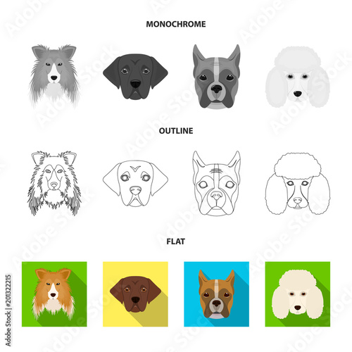 Muzzle of different breeds of dogs.Dog of the breed St. Bernard, golden retriever, Doberman, Dalmatian set collection icons in flat,outline,monochrome style vector symbol stock illustration web.