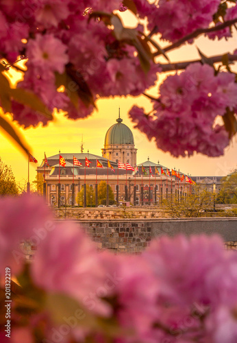 Fridge magnet Budapest, Hungary - Beautiful Buda Castle at sunrise with cherry blossom and morning sun. Spring has arrived in Budapest