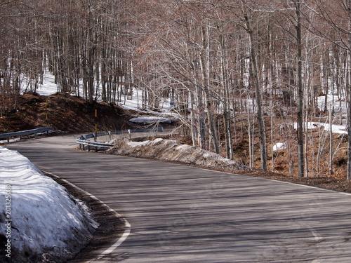 Foto Murales strada nel bosco