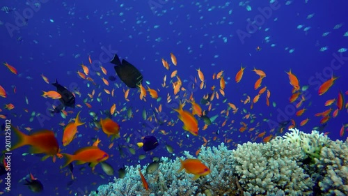 The marine life of tropical fish. Coral reef. Tropical sea and coral reef.