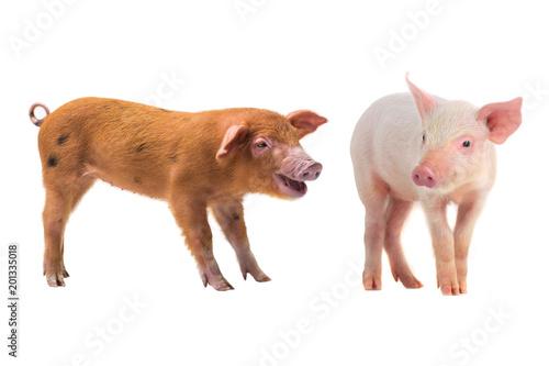 Foto Murales two pig