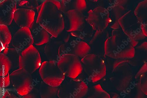 piękne czerwone płatki róż kwiatów tle