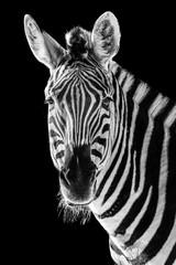 Zebra Closeup II