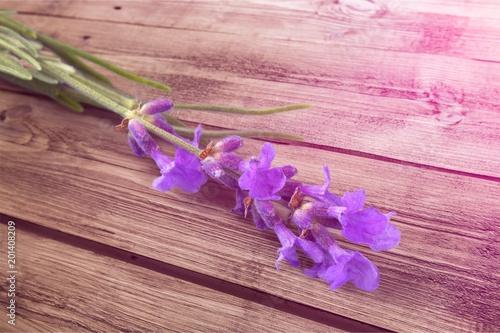 Foto Murales Lavender.