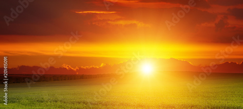 Aluminium Oranje Wide landscape of sunrise over green wheat field.