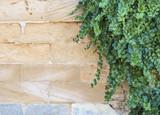 hanging plants on mediterranean brick wall