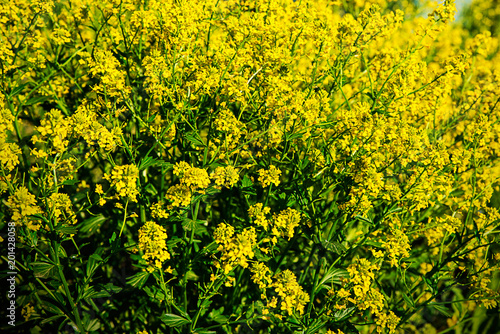 Plexiglas Geel Yellow field flowers