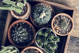 Close up image of different kinds of cactus - 201435033