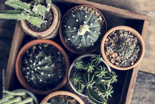 Close up image of different kinds of cactus