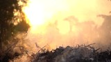 smoke with sunset in slow motion - 201446801