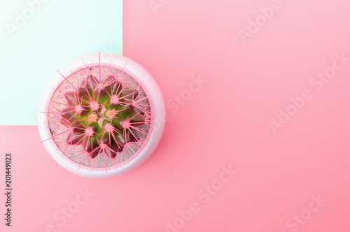 Pink cactus in white flower pot on Light rose and mint background. Trendy Vanilla Colors. Copy space. Flat lay. - 201449823