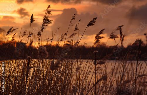 Foto Murales Sonnenuntergang am Serpentine Lake im Hyde Park mit Schwan im Vordergrund