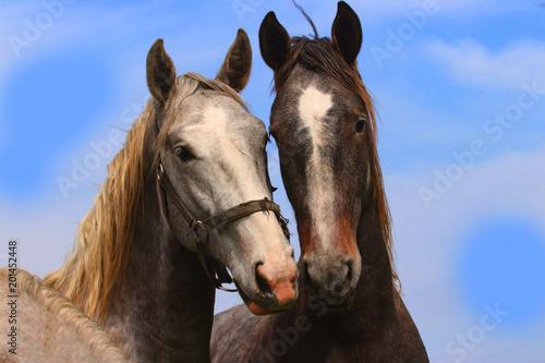 Plexiglas Paarden Pair horses with blue sky